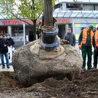 Baumpflanzung am OEZ