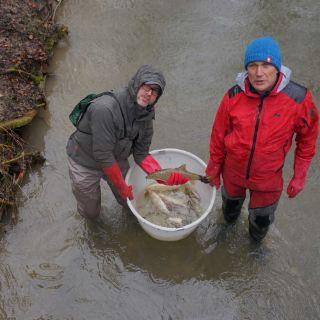 Engagierte Fischer setzen Fische in andere Gewässer um