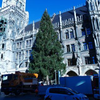 Christbaum auf dem Marienplatz