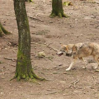 Bilder vom Wildpark Poing