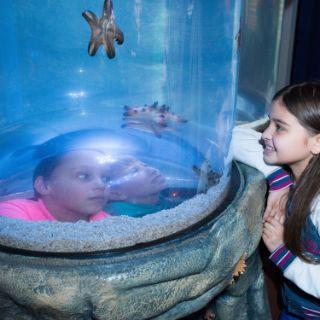 Wasserwesen im Sea Life bestaunen