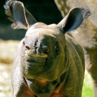 Tierpark Hellabrunn Publikumslieblinge