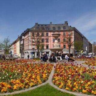 Bilder: München blüht