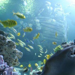 Das tropische Becken im Sea Life München