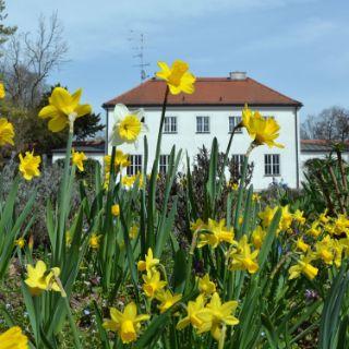 Die schönsten Orte für Frühlingsluft und Blütenpracht: Hier blüht München auf