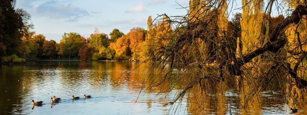Herbstlicher See im Englischen Garten