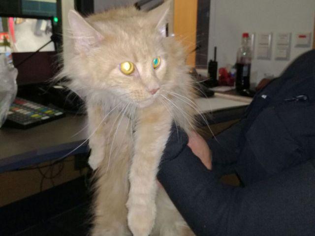 Katze, die am Münchner Hauptbahnhof gefunden wurde., Foto: Bundespolizei