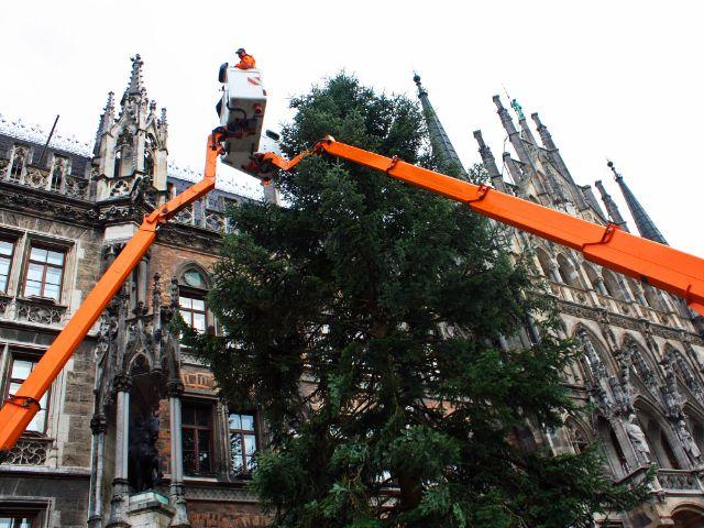 Der Christbaum 2017 am Marienplatz, Foto: muenchen.de/Leonie Liebich
