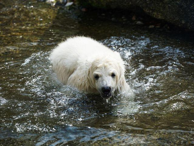 Eisbärenmädchen Quintana, Foto: muenchen.de/Lukas Fleischmann