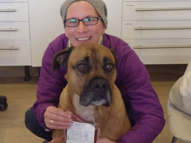 Hund Kasper bei der Blutspende., Foto: Meike Swoboda-Hilger