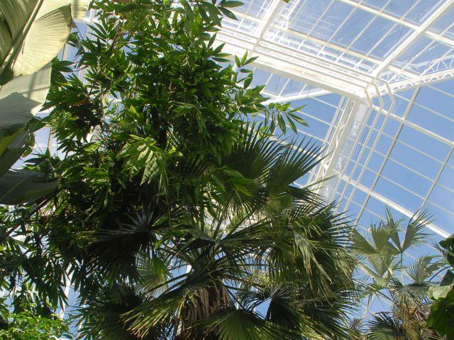 Gewächshäuser Im Botanischen Garten Wieder Geöffnet Das Offizielle
