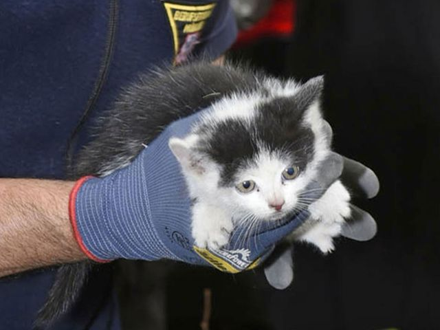 Katze aus Auto befreit, Foto: Berufsfeuerwehr München