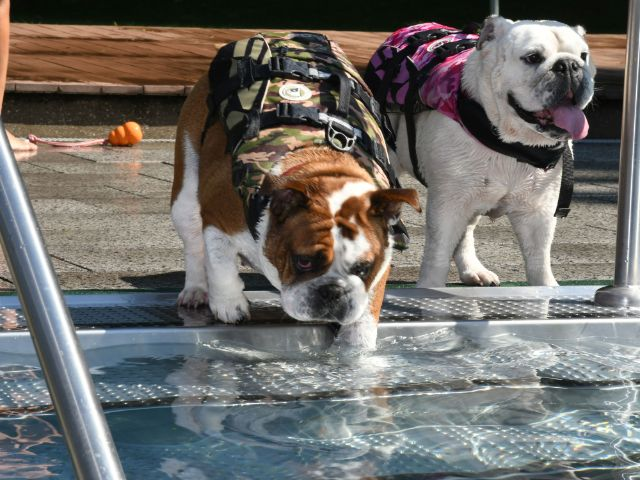 Hundebadetag im Dantebad , Foto: SWM/Catherina Hess