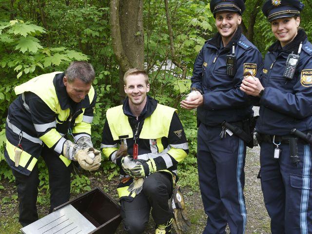 Feuerwehr und Polizei bringen Gänsesäger-Küken zur Isar, Foto: Berufsfeuerwehr München