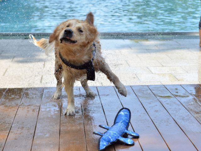 Hundebadetag der SWM im Dantebad, Foto: SWM / Schmidbauer