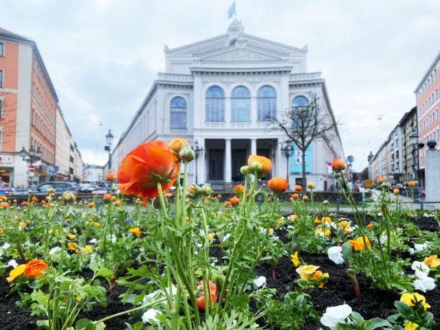 Es blüht am Gärtnerplatz im Frühling 2021, Foto: Anette Göttlicher