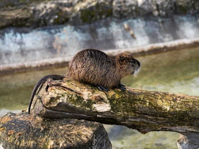 Impressionen aus dem Wildpark Poing, Foto: Shutterstock