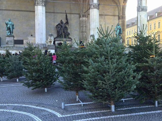 Weihnachtsbaum liefern munchen