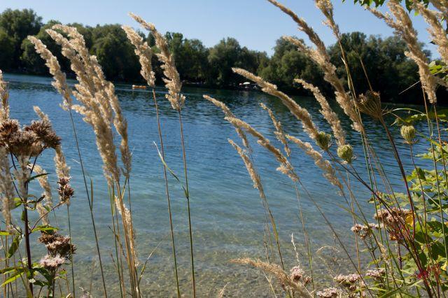 Gras am Feldmochinger See, Foto: Katy Spichal