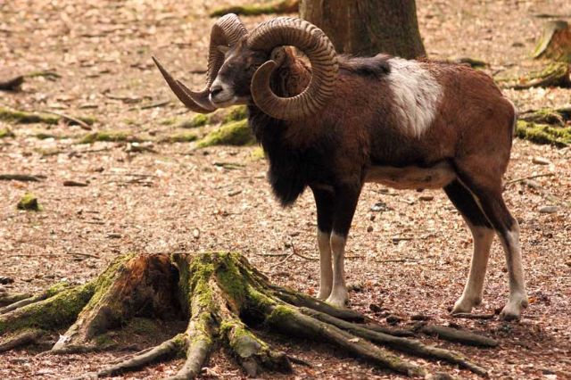 Wildpark Poing Bock, Foto: Immanuel Rahman