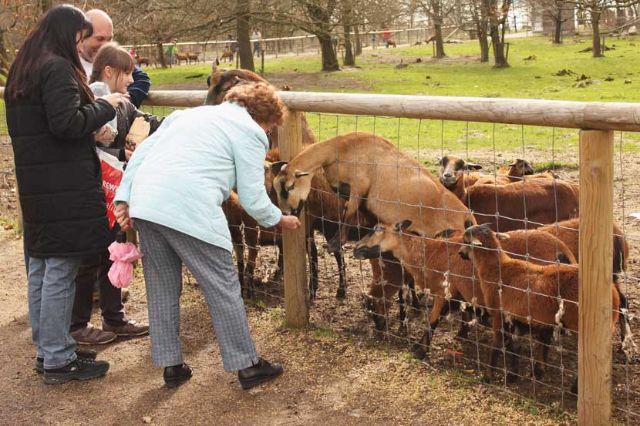 Wildpark Poing Ziegen füttner, Foto: Immanuel Rahman