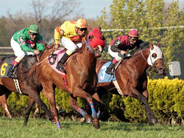 Pferderennen, Foto: Racheal Grazias/shutterstock.com