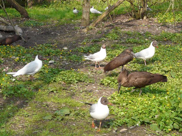 Vogelpark Olching, Foto: Vogelpark Olching