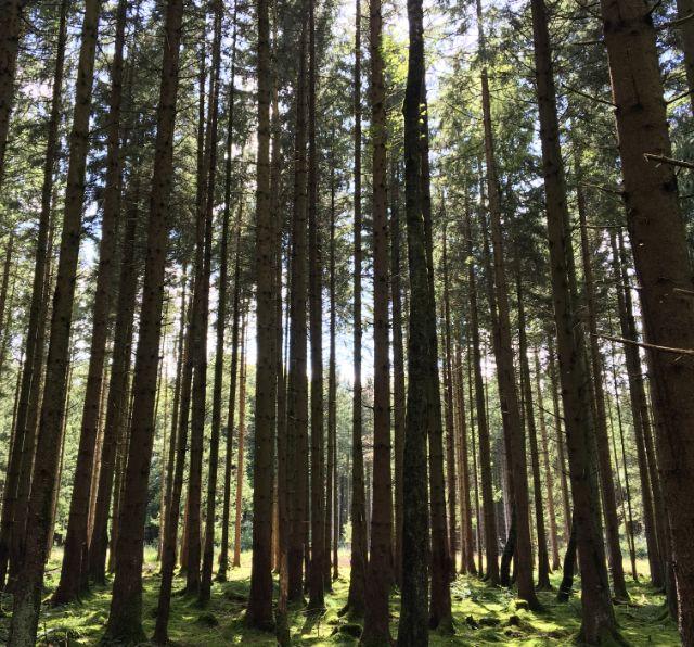 Forstenrieder Park: Sonne, Bäume und Moos, Foto: Dominik Zientek