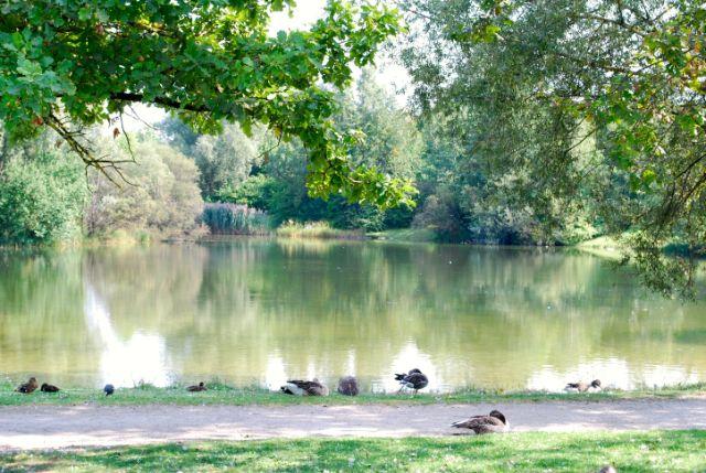 zamila-see, zamilapark, see, biotop, zamdorf, Foto: Michael Neißendorfer