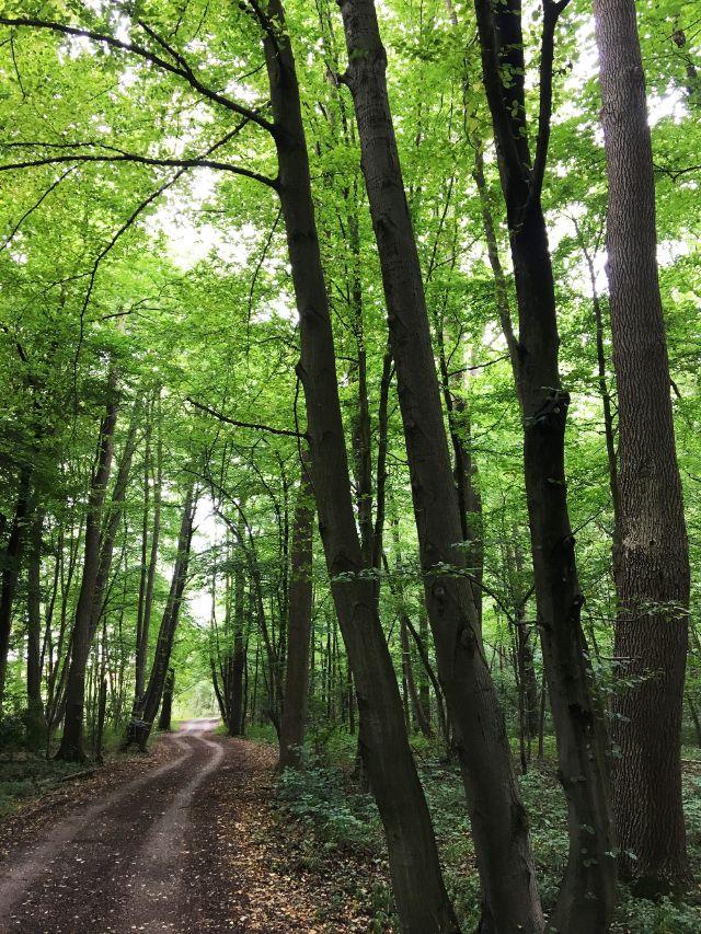 Allacher Lohe, Naturschutzgebiet