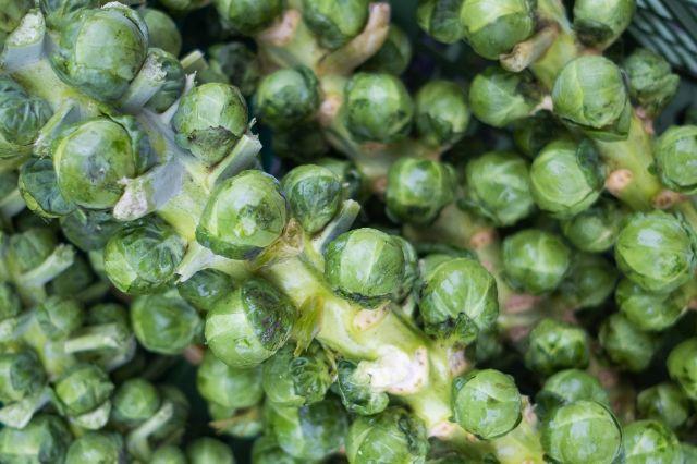 Rosenkohl enthält besonders viele Vitamine, Foto: Anette Göttlicher