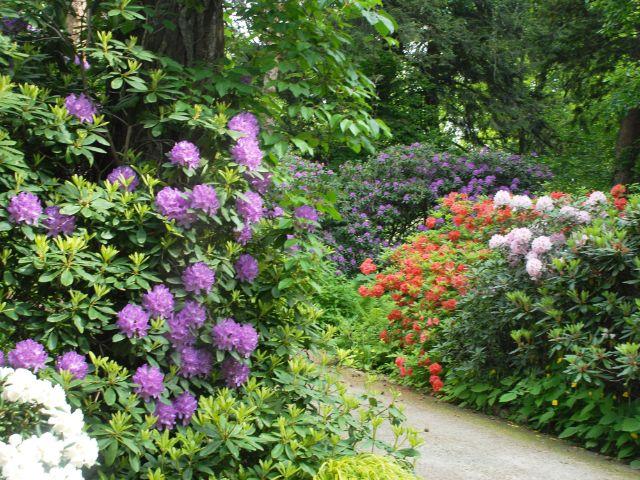 Rhododendron-Hain im Botanischen Garten, Foto: Botanischer Garten Neuhausen-Nymphenburg