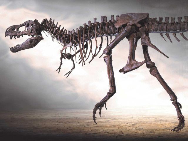"""""""Rocky"""" - das weltweit einzige echte Skelett eines jugendlichen Tyrannosaurus rex!, Foto: Dinosaurier Museum Altmühltal"""