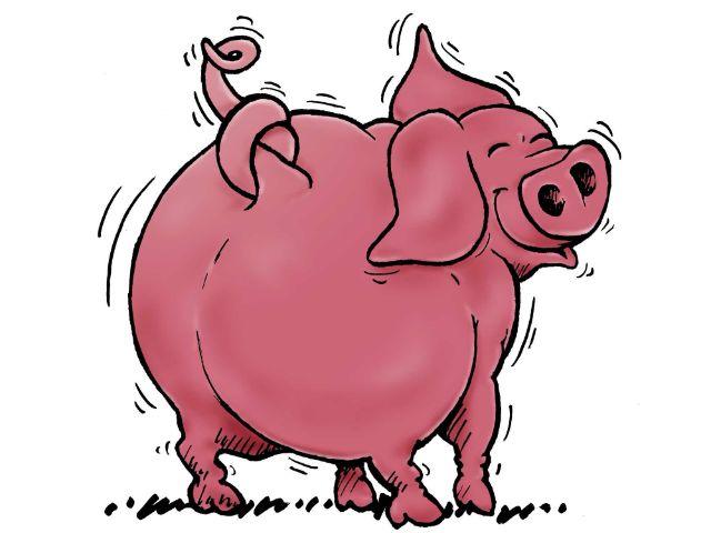 Schwein, Foto: YourMunichTour