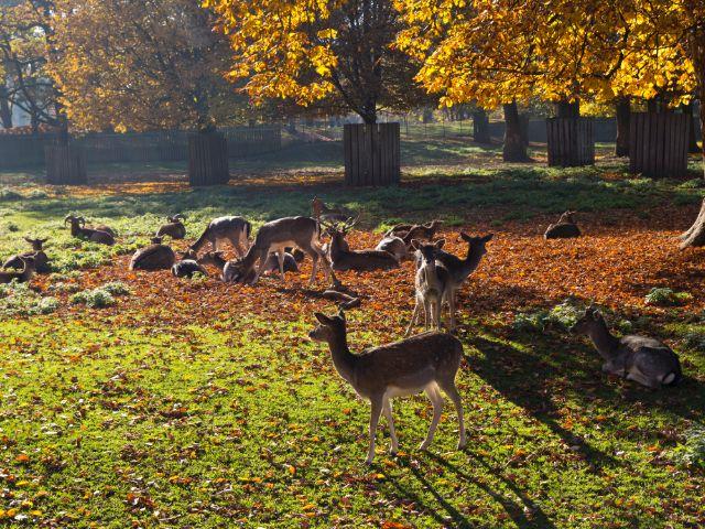 Hirschgarten im Herbst, Foto: Katy Spichal
