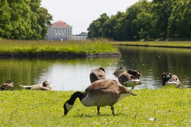 Schlosspark Nymphenburg Mittelkanal