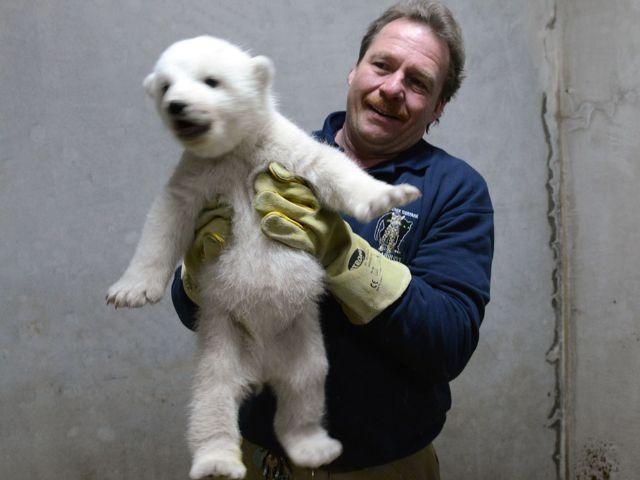 Eisbärjunges mit Tierpfleger, Foto: Tierpark Hellabrunn