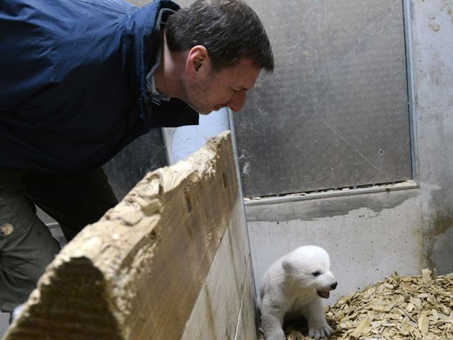 Zoodirektor Dr. Knieriem mit Eisbärbaby, Foto: Tierpark Hellabrunn