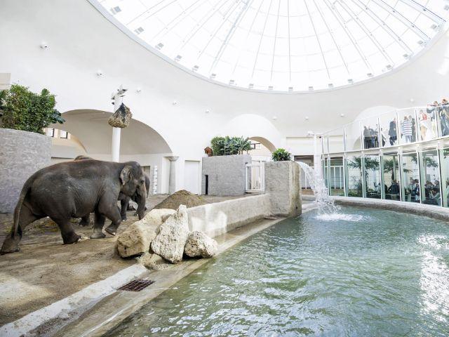 Eröffnung des fertig gestellten Elefantenhauses im Tierpark Hellabrunn: Innenansicht, Foto: Tierpark Hellabrunn / Marc Müller