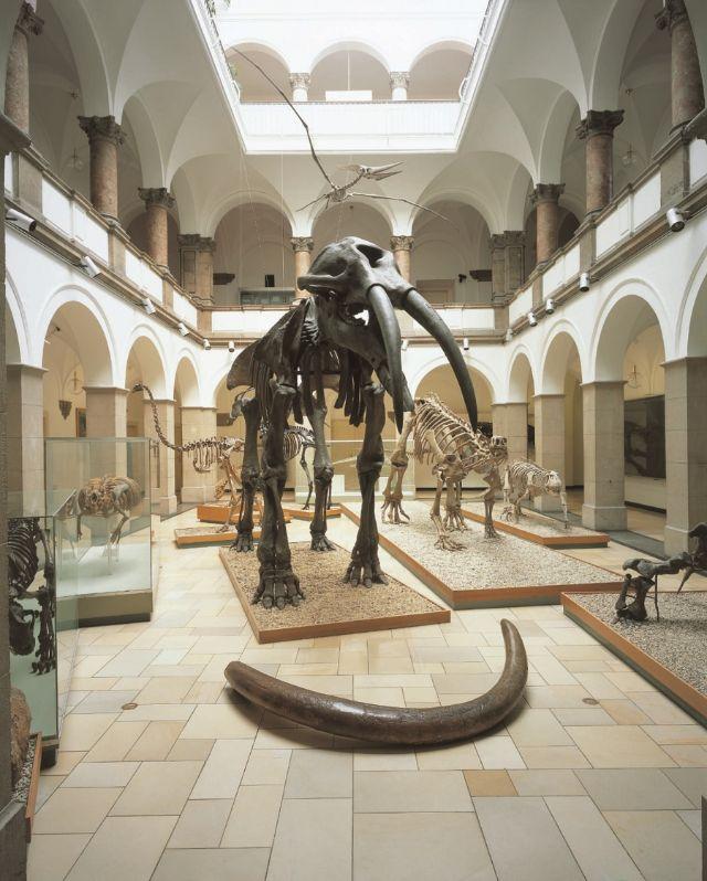 , Foto: ©SNSB-BSPG_Paläontologisches Museum München