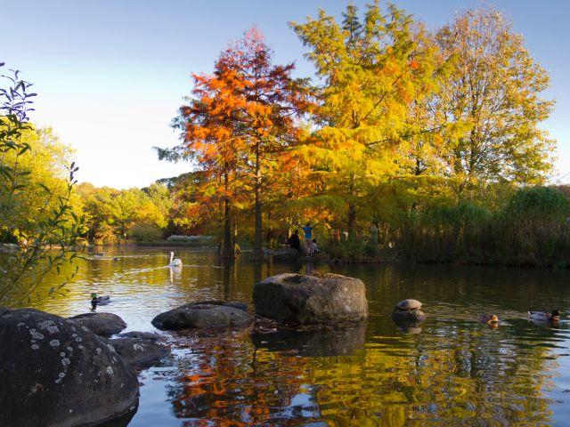 Herbst im Westpark, Foto: Katy Spichal