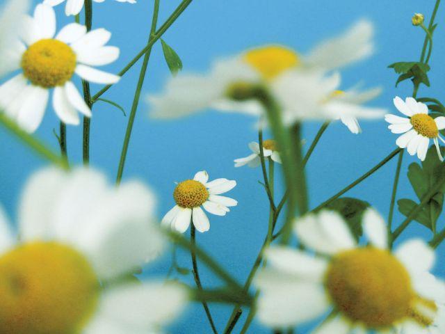 1000 blaue Wunder - Sommerprogramm der MVHS , Foto: MVHS