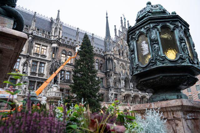 Der Christbaum 2020 vor dem Neuen Rathaus auf dem Münchner Marienplatz, Foto: Rico Güttich