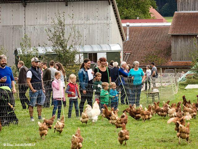 Menschen und Hühner