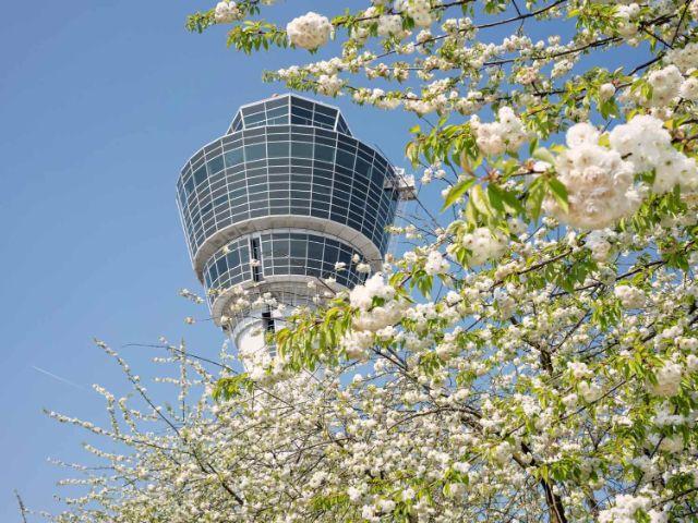 Flughafentower hinter blühendem Baum, Foto: Flughafen München