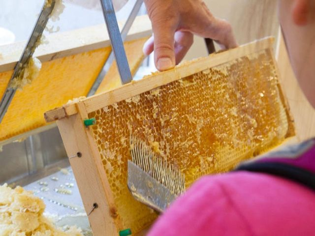 Kind vor Bienenwabe, Foto: StMELF