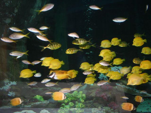 Fischschwarm im Sea Life München., Foto: Sea Life München