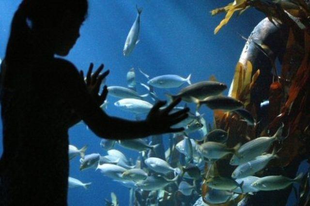Unterwasserwelt im Olympiapark, Foto: Sea Life Deutschland