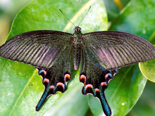Tropischer Schmetterling im Botanischen Garten, Foto: Botanischer Garten München