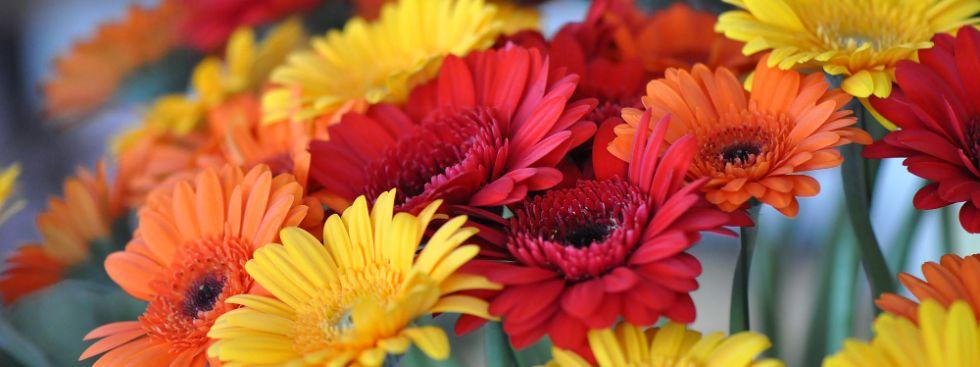 Blumen, Foto: Anette Göttlicher